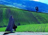 تصاویر دیدنی الناز شاکردوست در فیلم تابو