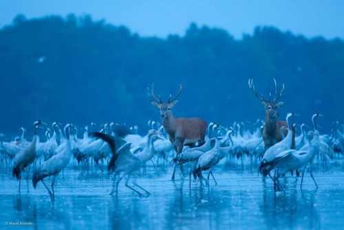 مهیج ترین نوع شکار لحظه ها در حیوانات + عکس
