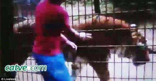 حمله ببر به یک پسربچه سه ساله در قفس + عکس