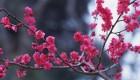 تصاویر گوناگون از گل های زیبا و طبیعی