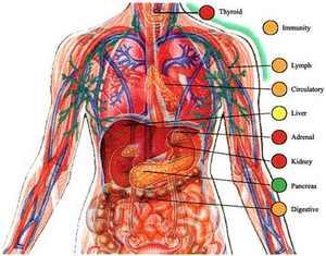 9 حقیقت واقعی و شگفت انگیز در مورد بدن انسان