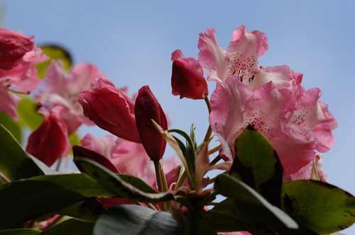 عکس های بی نظیر گل های رنگارنگ طبیعت اسکاتلند