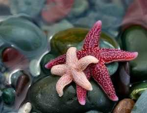 استفاده ستاره دریایی برای درمان سکته مغزی