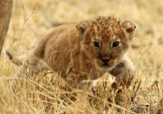 جدیدترین سری عکس های طبیعت و حیوانات