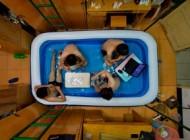 عکس های دیدنی از استخر تابستانی دانشجویان در خوابگاه