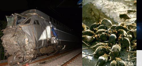 تصادف وحشتناک دو قطار به خاطر موش ها + عکس
