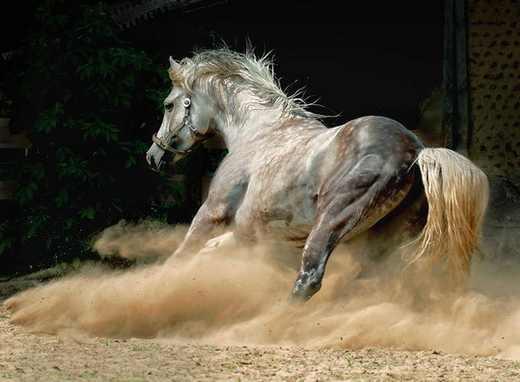 گالری جدید و زیبا از اسب های وحشی و دیدنی
