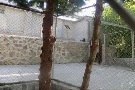 تصاویری از شرایط ناگوار حیات وحش در اصفهان