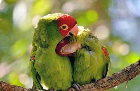 دو پرنده عاشق+همسر عاشق