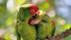 این دو پرنده از صمیم قلب عاشق هم هستند + عکس