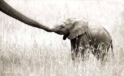 سری جدید عکس های عاشقانه و دیدنی حیوانات