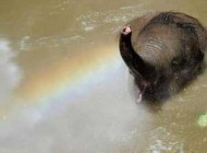 کلافه شدن حیوانات از گرمای شدید + عکس
