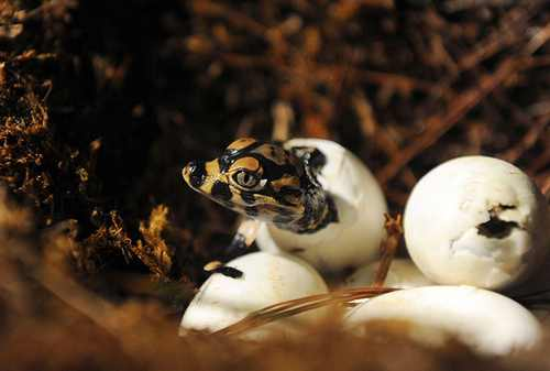 عکس های دیدنی و جالب از حیوانات دوست داشتنی
