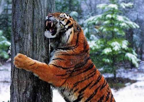 عکس های جالب و دیدنی از حیوانات بازیگوش در برفی