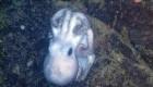 عجیب ترین رفتار اختاپوس ماده با تخم های خود + عکس
