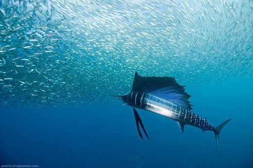 عکس های زیبا و دیدنی از دنیای زیر آب ها