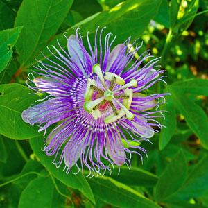 بیماری های اعصاب و روان را گیاهی درمان کنید