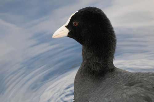 پرندگان زیبا در طبیعت خوش آب و هوای اسکاتلند