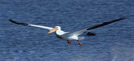 آشنایی با پهن بال ترین پرندگان دنیا + عکس