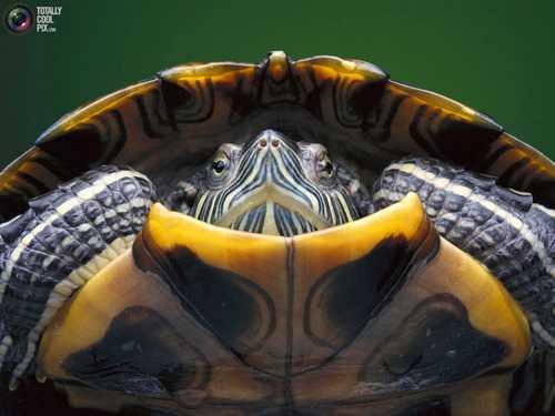 عکس های دیدنی و خیره کننده از حیوانات در طبیعت