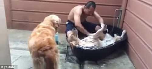 عکس های دیدنی اوج لذت یک سگ هنگام ماساژ و حمام