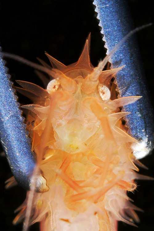 عکس های حیرت انگیز از جانوران زیبا و ترسناک دریایی