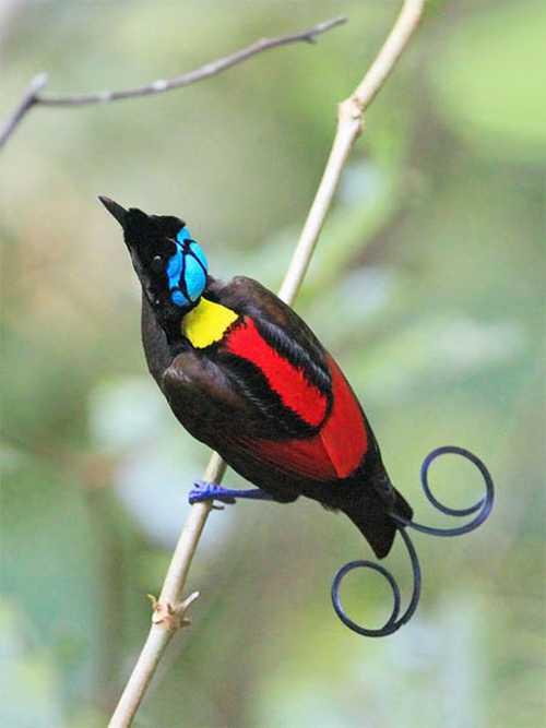 عکس های فوق العاده از پرندگان زیبا و عجیب