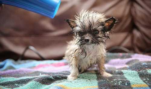 تصاویر بامزه و دیدنی از کوچکترین سگ بریتانیا + عکس