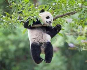 عکس های دیدنی و عجیب از دنیای زیبای حیوانات