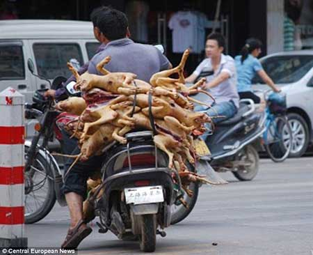 آشنایی با 13 واقعیت عجیب در مورد چینی ها
