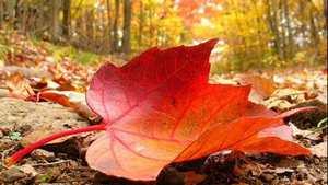اس ام اس های جدید و زیبای پاییزی