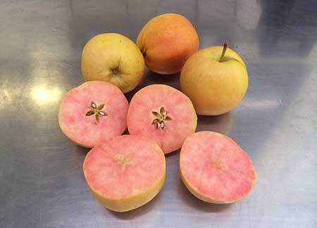 رونمایی سیب های عجیب و غریب با نام سوپرایز + عکس