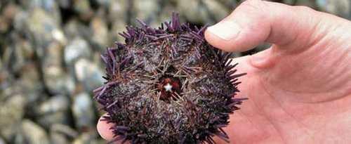 عجیب ترین موجوداتی که توسط انسان زنده خورده می شود