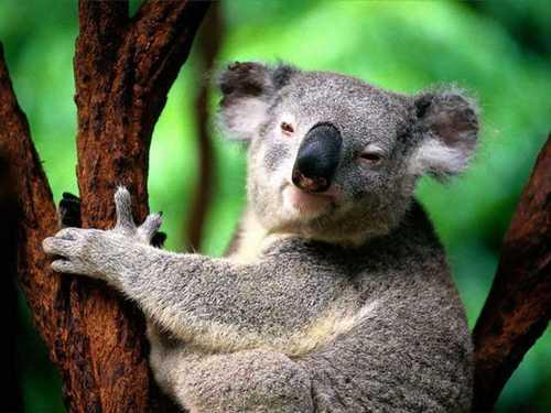 سری جدید و دیدنی عکس های خنده دار از دنیای حیوانات
