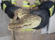تمساح در ساختمان مسکونی در تهران موجب وحشت ساکنان شد