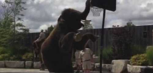 عکس های داغ و دیدنی فیل بسکتبالیست
