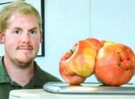 بزرگترین گوجه فرنگی دنیا گینس را شکست داد + عکس