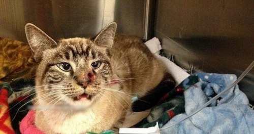 تصاویر ناراحت کننده و دردناک از گربه خوش اقبال