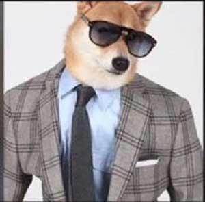 سگ میلیونر