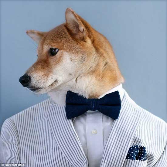 سگ لباس پوش