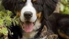 عکس های جالب همنشینی حیوانات