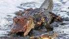 عکس هایی جالب از حرکت عجیب خرچنگ در برابر تمساح