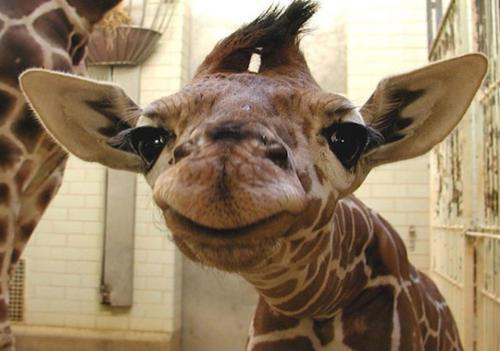 عکس های جالب و بامزه خنده حیوانات