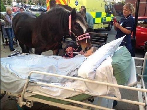 بوسه کره اسب بر صورت خانم در بیمارستان! +عکس