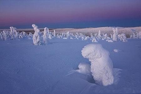 عکس های جالب از جنگل یخ زده در فنلاند معروف به زادگاه بابانوئل