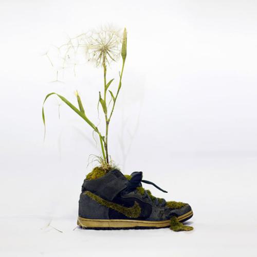 هنرنمایی خلاقانه و جالب باکفش های کتانی نایک +عکس