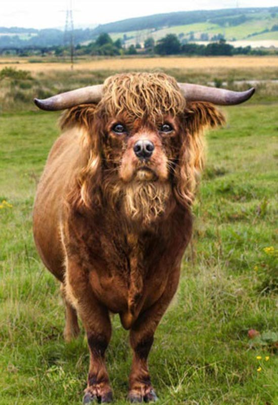 ترکیب جالب چهره های حیوانات با فتوشاپ