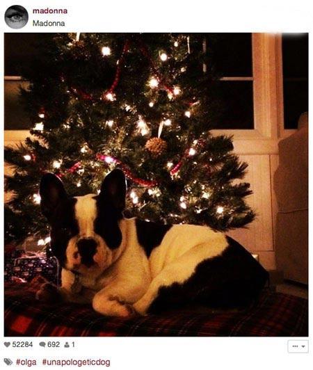 تصاویری جالب از درخت کریسمس ستاره ها