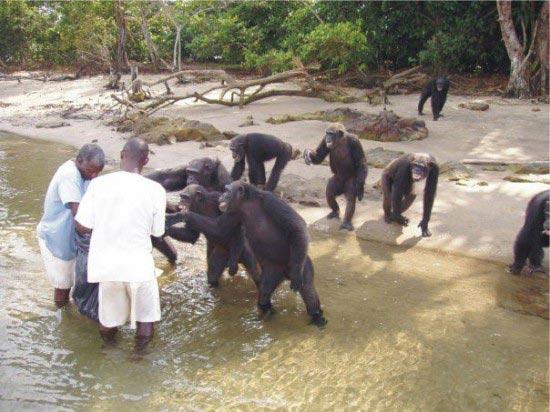 جزیره میمون ها در غرب کشور لیبریا +عکس