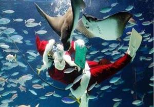 بابانوئل در اعماق دریا! +عکس